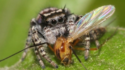 "alt=""Spiders eat twice as much as humans"""