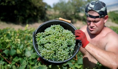 "alt=""Santé! French wine output set for rebound as harvest races ahead"""