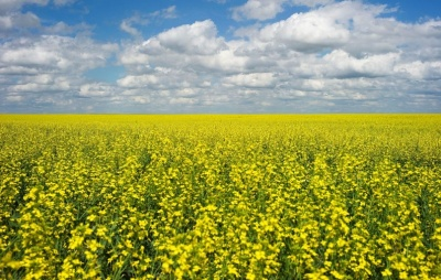 "alt=""Canada says third canola exporter has run into trouble in China"""
